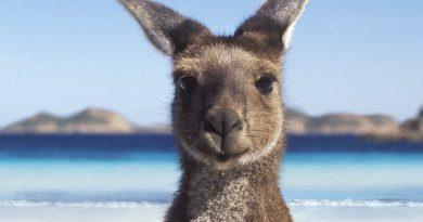 De noodzaak van een toeristenvisum om Australië binnen te komen