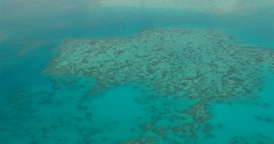 Gran Arrecife de Coral: El patrimonio de la humanidad